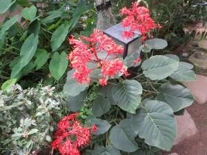 植物の姿(上から)