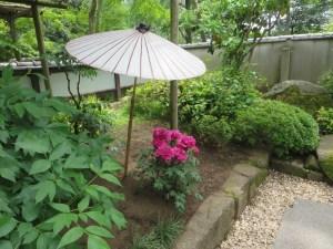 ボタン 日本庭園の中で