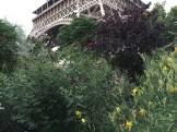 エッフェル塔の下で咲くブッドレア フジウツギ