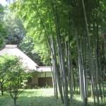 竹林と藁葺き民家