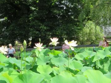 ハス池と前でくつろぐ人たち