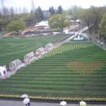 まだ咲く前のチューリップ公園