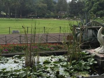 公園の中のガマ