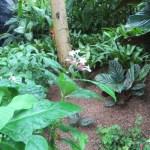 インドジャボクの花と葉の様子