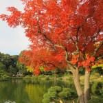 ハゼノキの木の様子