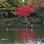 ハゼノキ 水に映える紅葉した櫨の木