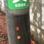 風で電柱に張り付いたカエデの葉