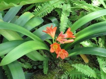 クンシラン 花の様子