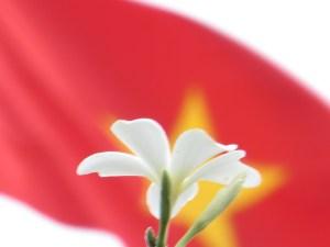 プルメリア (白系) 花のアップ(裏側)