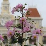 ベトナムのサルスベリ 花の姿