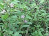 クコ 花の咲いている木の様子