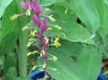 グロッバ・ウィニティ 花の様子