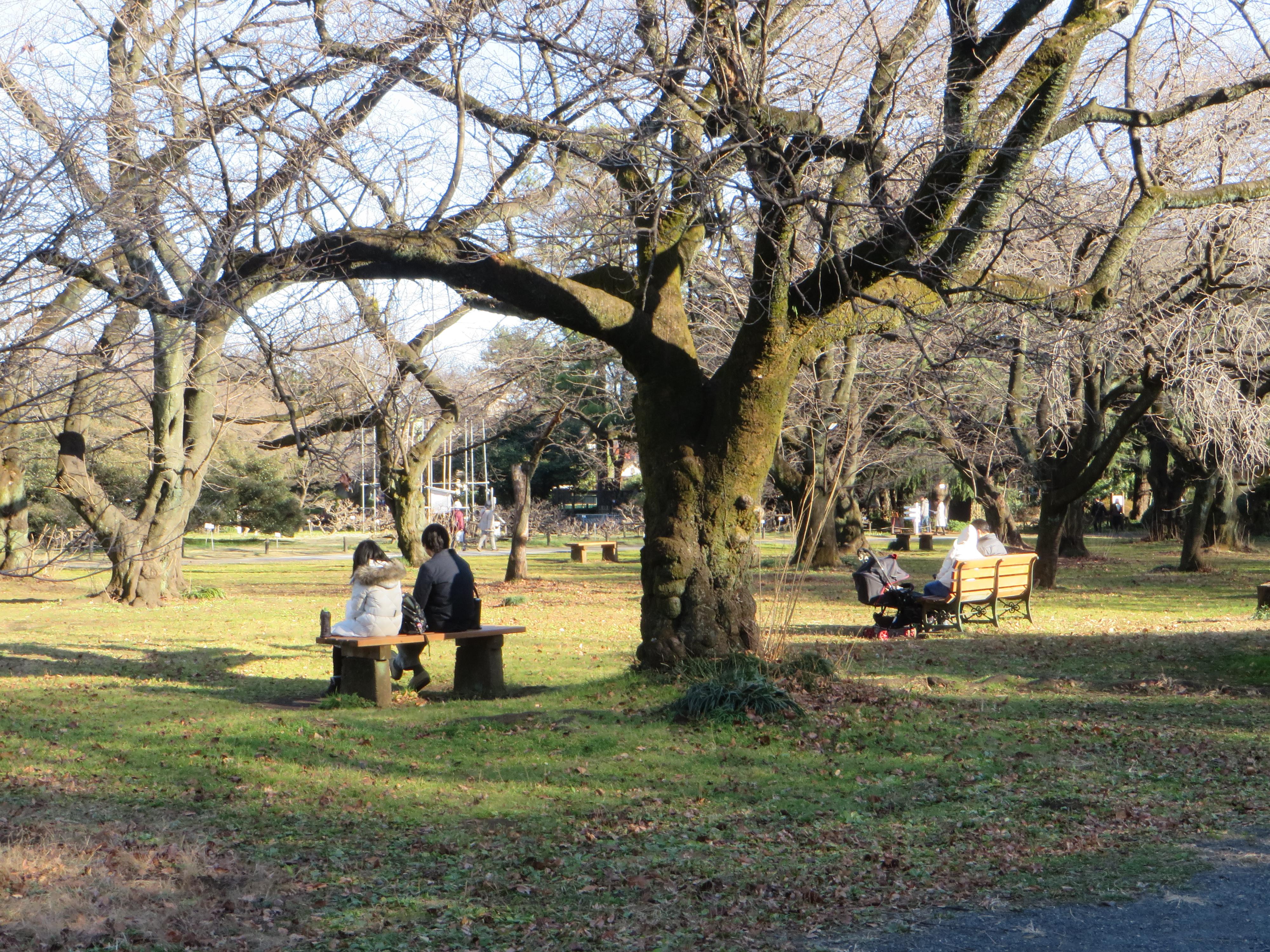 小石川植物園 冬の園内