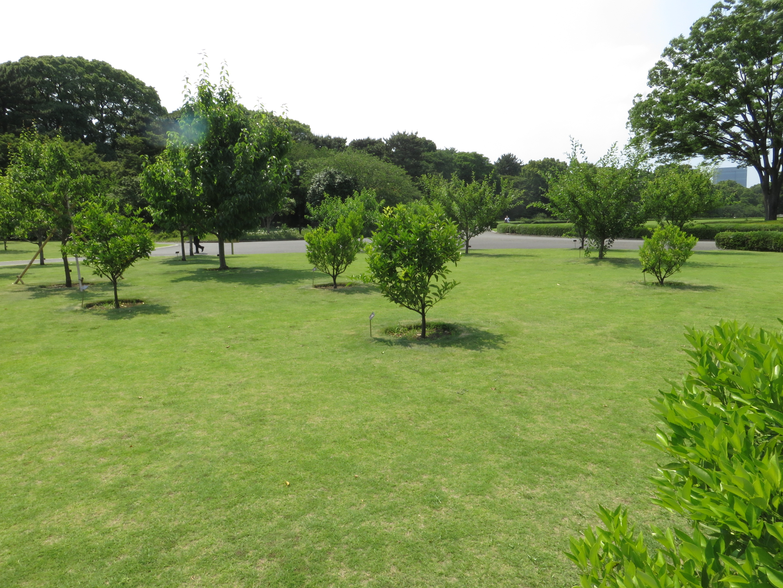 古品種の果樹園