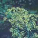 イノンド 花の様子