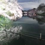 Cherry var. Someiyochino ソメイヨシノ 夜の井の頭公園 ソメイヨシノ