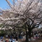 Koshioyama/ コシオヤマ 花の咲いている木の様子