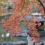 色づいた楓 colored maple