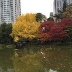 紅葉した日比谷公園