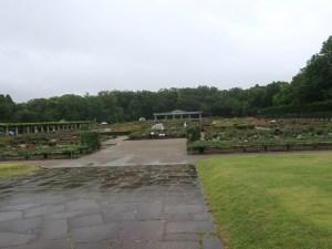 Rose garden in Jindai botanical garden