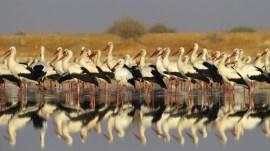 ઈઝરાયલથી કેટલાં પક્ષી આવે છે ગુજરાતમાં?