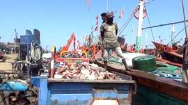 ફિશિંગનાં ખર્ચ સામે માછલીના યોગ્ય ભાવ ન મળતાં માછીમારોમાં નારાજગી
