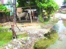 चापाकल के पानी सड़क पर