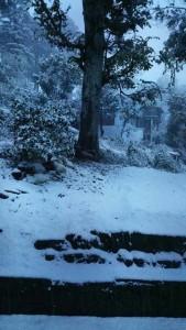 18-12-14 Mano - Winter Almora 1 (Shalini) web