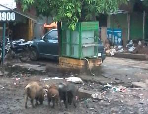 15-07-15 Karvi Bas Stop - Gandagi web