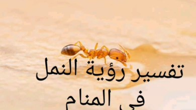 تفسير رؤية النمل للمتزوجة في المنام