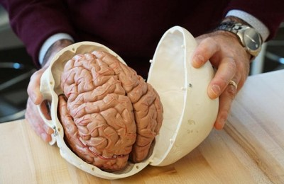 Facts, human brain