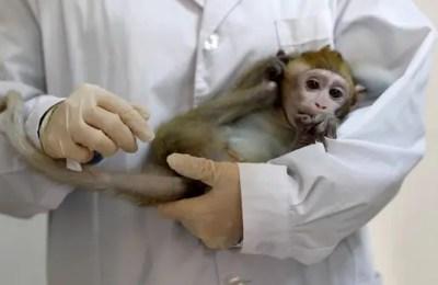 Monkeys, virus immunity, infection, vaccine, studies
