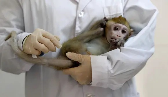 Monkeys, virus immunity, infection, vaccine, studies