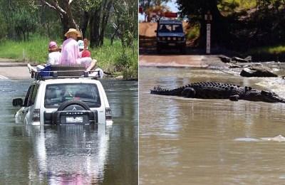 Kakadu National Park, crocodiles, Kakadu car crocodiles