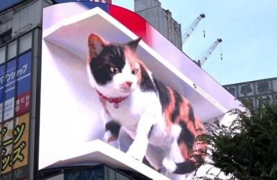 Giant 3D cat, Tokyo
