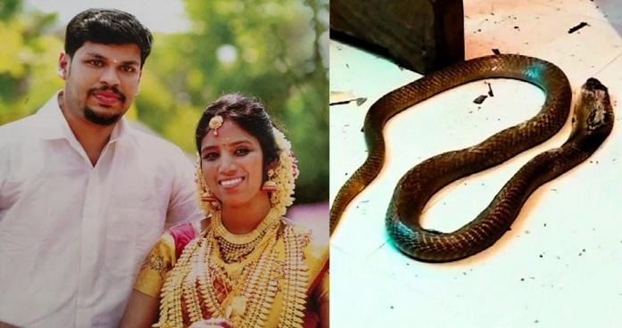 Indian cobra killer