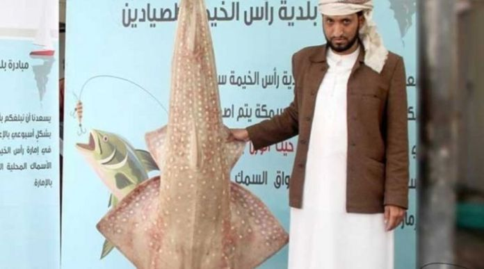 Local Fisherman catches Massive Suss Fish in Ras al Khaimah