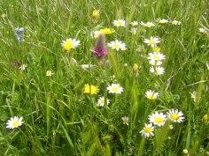 Meadow Mellow