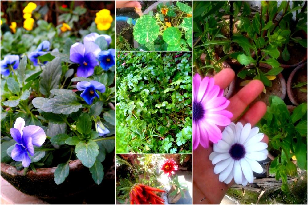 Organic Gardening, Future Plans & Me (1/6)