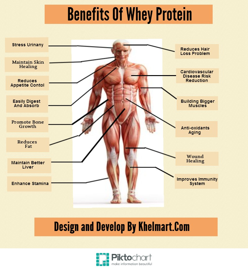 Protein Helps Build Muscle Fast