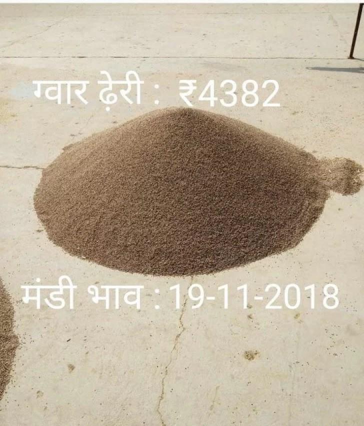 ताज़ा अनाज मंडी भाव : सोमवार 19-11-2018,narma bhav today,kapas bhav,guar bhav today