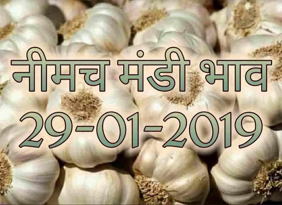 neemuch-mandi-bhav-29-01-2019
