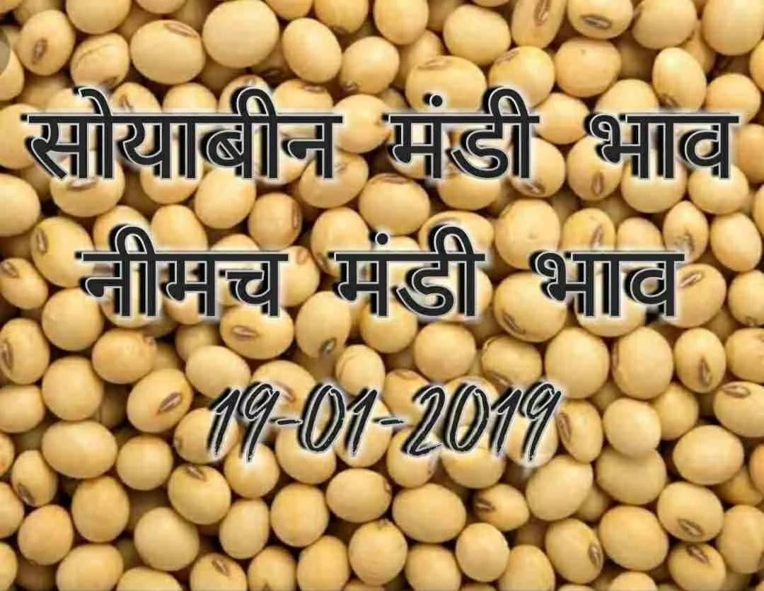 soyabean-mandi-bhav-19-01-2019, neemach mandi rates