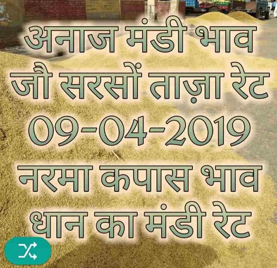 09-04-2019 Mandi Bhav Jo Sarso Narma Dhaan