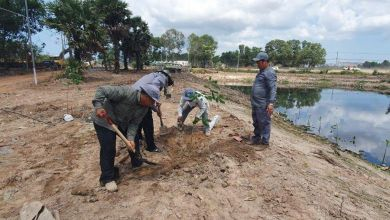 Photo of More than 15,000 trees planted in Sihanoukville in bid to fight pollution