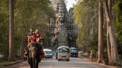 Photo of Elephant rides to stop at Cambodia's biggest attraction