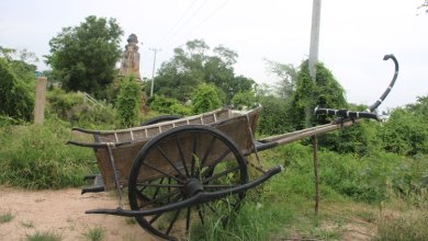 Photo of Cambodia's ancient Mercedes-Benz, the ox-cart
