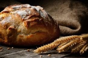 bread - science based nutrition