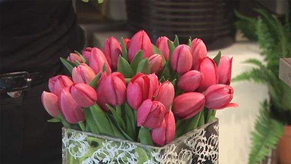 Kỹ thuật trồng hoa tulip trong chậu tại gia
