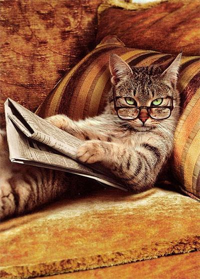 """9 sự thật """"gây sock"""" dành riêng cho người yêu mèo"""
